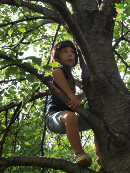 incontri-sugli-alberi